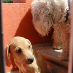 Puerto Vallarta puppy and dog