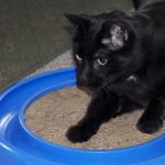 Pořiďte vaší kočce užitečné škrabadlo