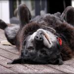 Když pes potřebuje operaci – zaplatit několik tisíc nebo utratit?