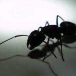 Mravenčí akvárium