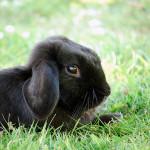 Rabbits n Stuff