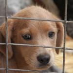 Útulky pro zvířata