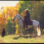 Jste vyznavači koní a všeho, co k nim patří? V kvalitním a vybaveném e-shopu Zooprodukt.com najdete vše potřebné!