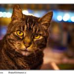 Kočka domácí, každá je originál vzhledem i povahou