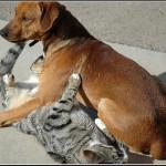 Cat & Dog playing – חתול וכלב משחקים