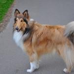 5 velmi známých plemen psů