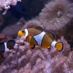 Mořské akvárium u vás doma