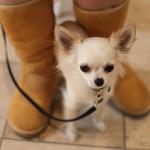 Co pochopí jen milovníci psů