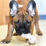 Šikovné pomůcky pro všechny majitele psích miláčků