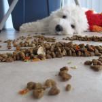 Hills – krmivo vysoké kvality pro psy i kočky