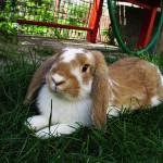 Granule pro králíky