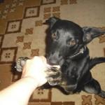 Náš pes, kříženec (2. díl)