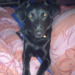 náš pes 3